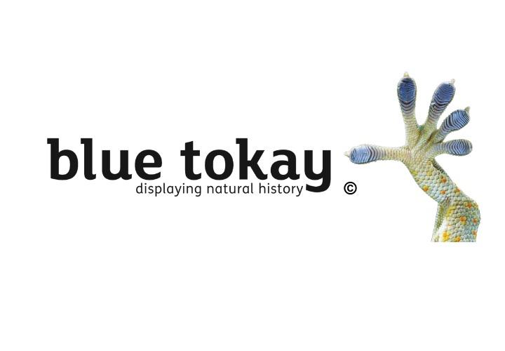 Visit Blue Tokay Ltd website