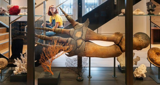 Trustee vacancy – Natural History Museum