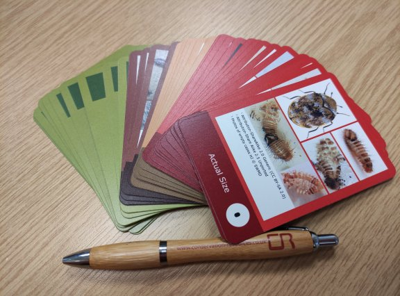 New card game to fight museum pests